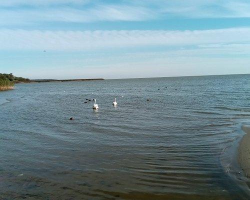 Вид на Куршский залив.