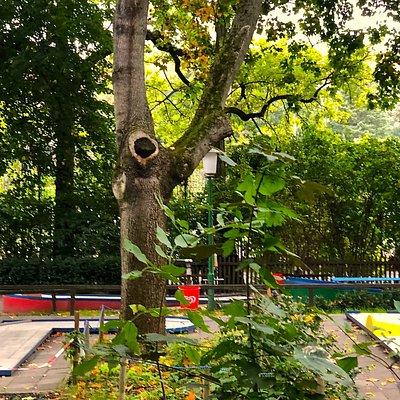 Alte Bäume befinden sich auf dem Areal der Minigolfanlage