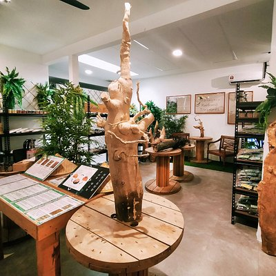 Welcome to Ayu Flores Malayan Herbals Tongkat Ali + Kacip Fatimah Museum. Learn all about our Malaysia treasure, Tongkat Ali + Kacip Fatimah at our rainforest store 🇲🇾🇲🇾🇲🇾
