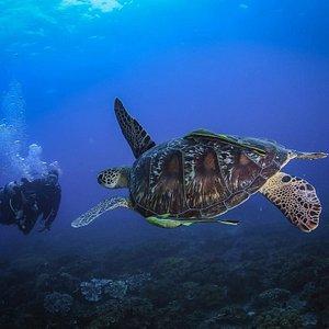 Diving Intro Hurghada Egypt