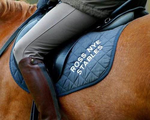 Ross Nye Stables proudly displayed on our saddle cloths, here seen on the gorgeous chestnut Figaro.