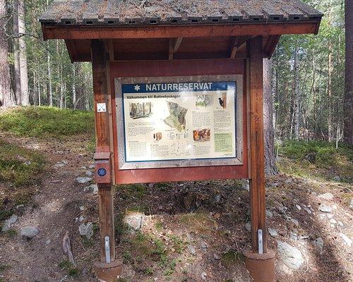 Rottnebyskogen naturreservat