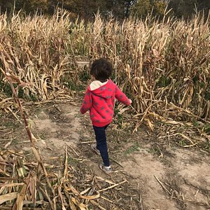 Corn maze and corn pit fun