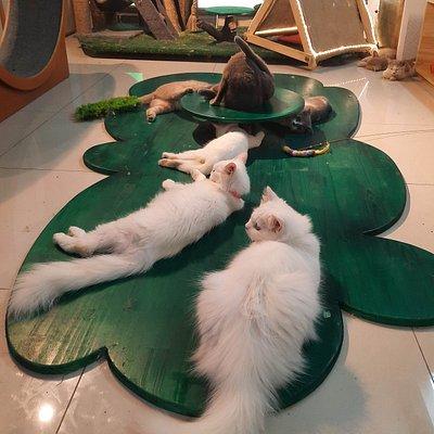 Không gian chơi mèo