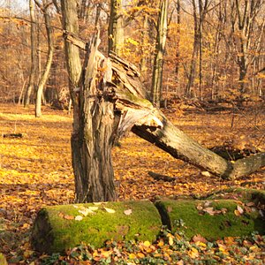 Las Bielański - Rezerwat Przyrody