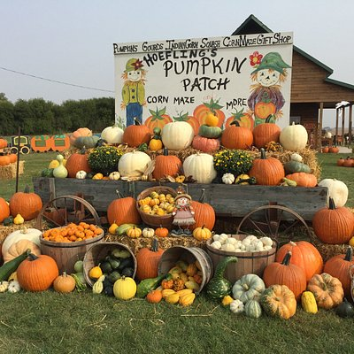 Over 50 varieties of pumpkins, 70 varieties of gourds, squash, Indian Corn, broom Corn, wheat and much more. Gift Shop and bakery! Corn Maze