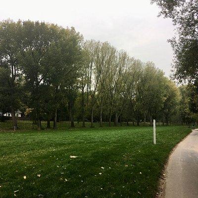 Ein Spaziergang über die Waldwege und Rhein entlang ist immer schön