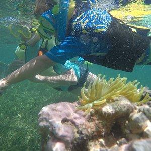 Snorkeling Tour at Pirate Snorkeling Shack