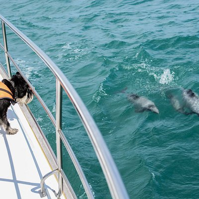 Buster our dolphin spotting dog and his friends.