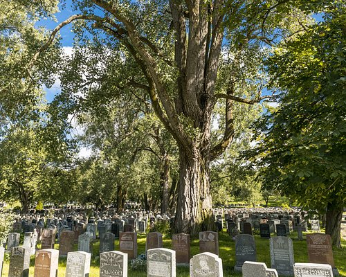 One of our oldest trees. © Mathieu Dupuis