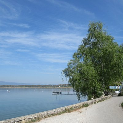along the lake