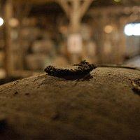 Tonneau d'Armagnac