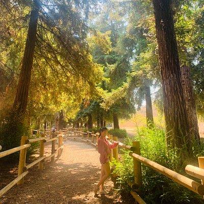 Beautiful trail - hiking