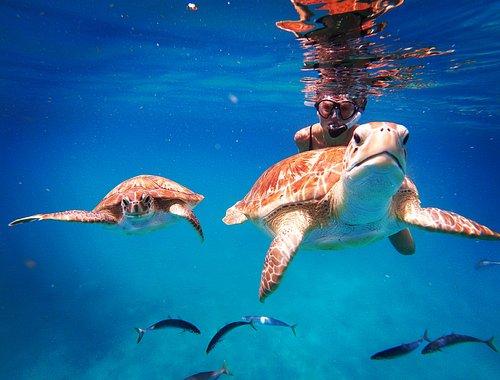 Barbados snorkeling Photos by Hayden Browne