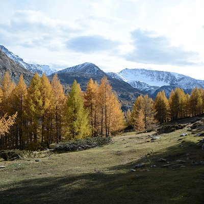 Mongolian autumn at Altai Mountains