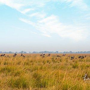 Ride the Zambezi flood plains amongst herds of Wildebeest, Zebra, Lechwe and more