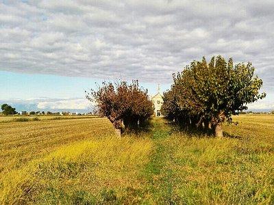 Paesaggio autunnale / Anello di Cesarolo