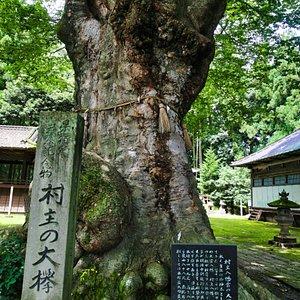 村主八幡神社:大欅と石碑