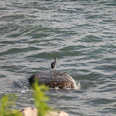 A bird in Telegraph Bay