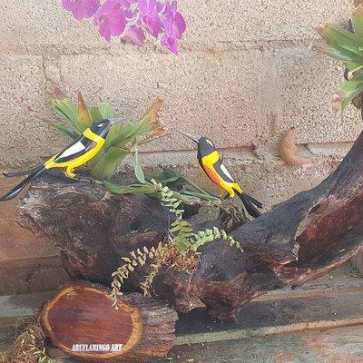 trupial local Aruba bird on a hard wood
