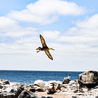 Tour Isla Española - Albatros
