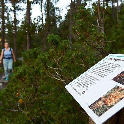 Naturkundlicher Wanderweg Isel à Arosa (canton des Grisons)