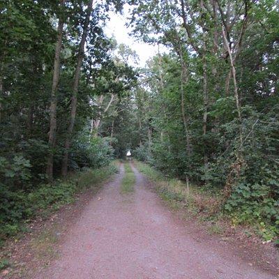 Mer skogsväg