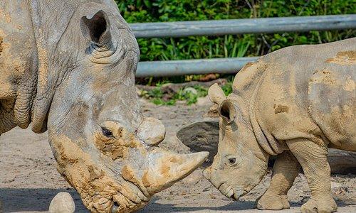 Impressionen aus dem Zoo Dortmund - Foto: Stawinoga