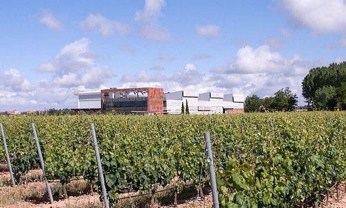 Nuestra bodega integrada en las 87 hectáreas de viñedo en un solo pago.