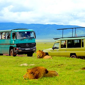 Ngorongoro Crater is the best place in Africa to spot  lions