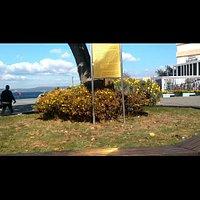Manolya Ağacı 8