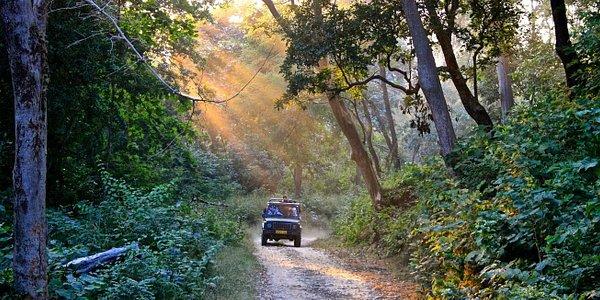 Jeep Safari at Corbett with Explore Corbett