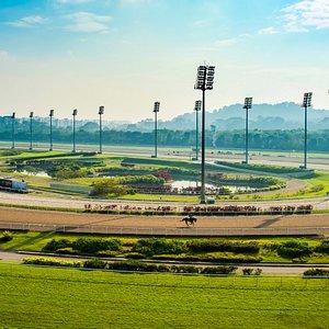 Overlooking the racecourse