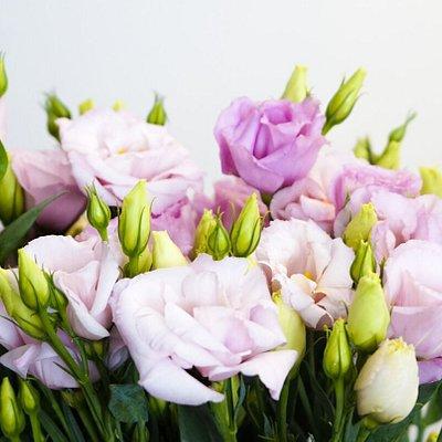 Szeroki wybór pięknych róż oraz innych kwiatów.