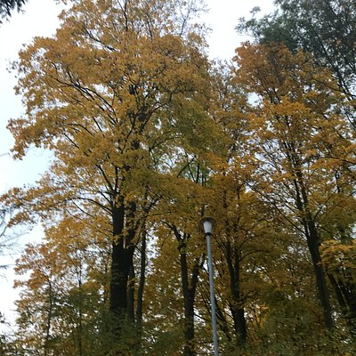 Stromy se hezky zbarvily a za nimi je cesta k jezírkům.
