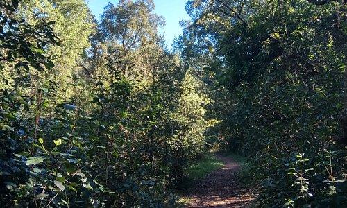 Pomezia sentieri selva dei pini
