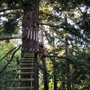 Perchés à 25 mètres de hauteur dans les séquoias géants, nos grands parcours vous procureront une expérience unique à moins d'une heure de Toulouse !