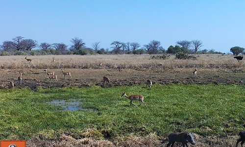 This is How our park becomes when the rainy season arrives! Amazing Wildlife at Banhine Ntional Park
