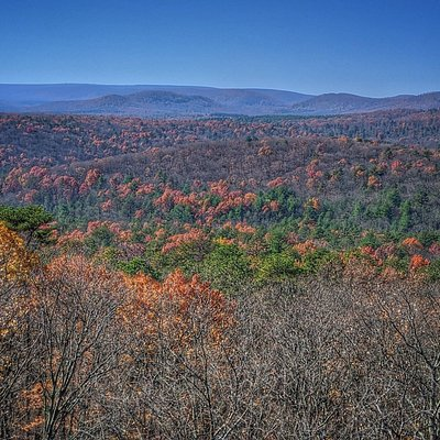 Michaux State Forest- View from Vista Trail