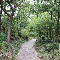 都会の真ん中とは思えない雑木林の中の散策路1