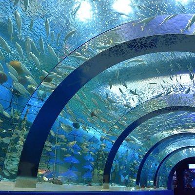 トンネル水槽むつ湾の海