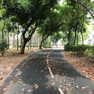 The bike path going through the Tai Po Waterfront Park