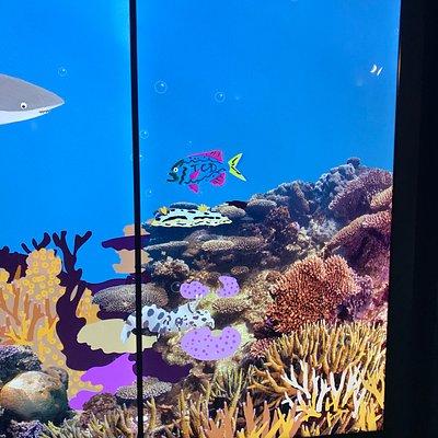 Pretend aquarium wall in the centre