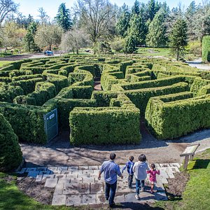 Find your way through the Elizabethan hedge maze made up of over 3,000 pyramidal cedars.