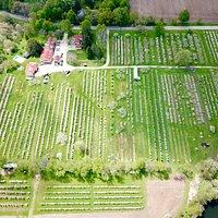 Aerial shot at springtime bloom