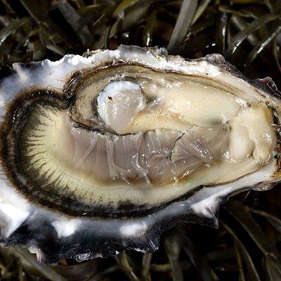 Renommée à juste titre, les huîtres de Paimpol sont une référence dans ce genre de produit de la mer.