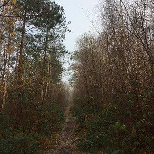 4.  Friezley Wood, Cranbrook, Kent