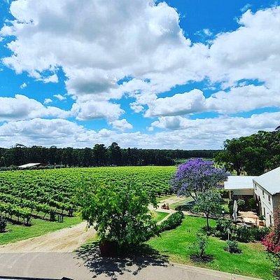 Tintilla Estate Wines, vineyard view