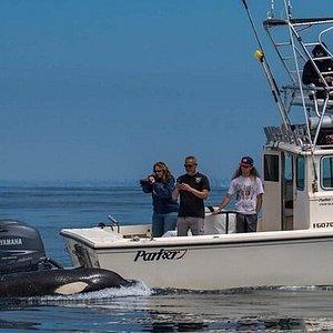 Wild Orca's off the San Diego Coast!