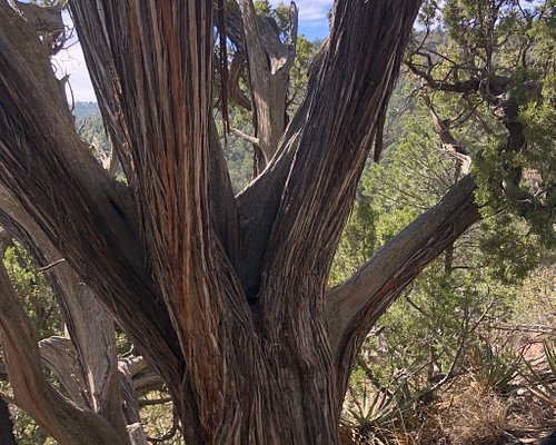 Climax Canyon hiking trail in Raton, NM